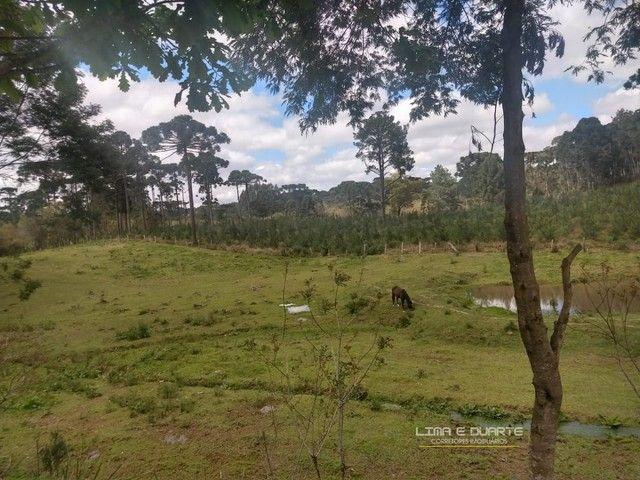 Chácara para Venda em Quitandinha Rio Negrinho-SC - Foto 10
