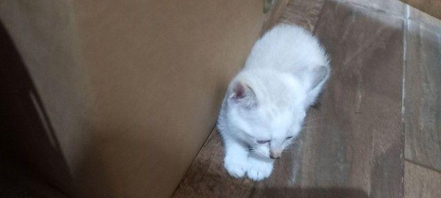 Doação para esses gatinhos  - Foto 4