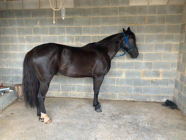 Vende - se cavalo  - Foto 3