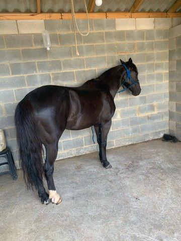 Vende - se cavalo  - Foto 4