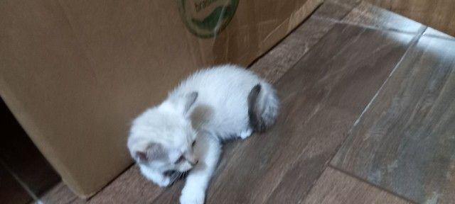 Doação para esses gatinhos  - Foto 2