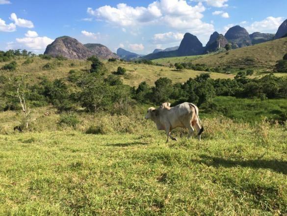Fazenda - Centro Guaratinga - Foto 6