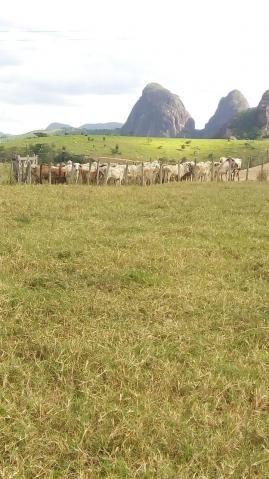 Fazenda - Centro Guaratinga - Foto 9