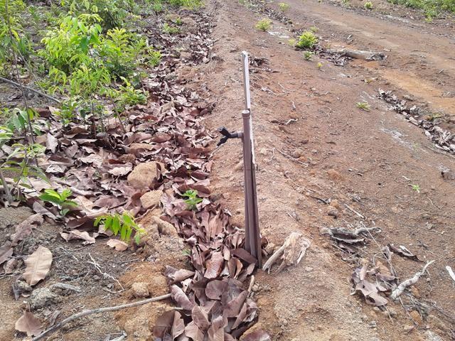 Vendo uma cachará verdi toda bosquêada - Foto 4