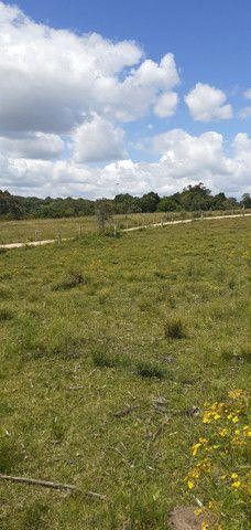 Chacara de 2 hectares á 7 km da br 293 - Foto 2