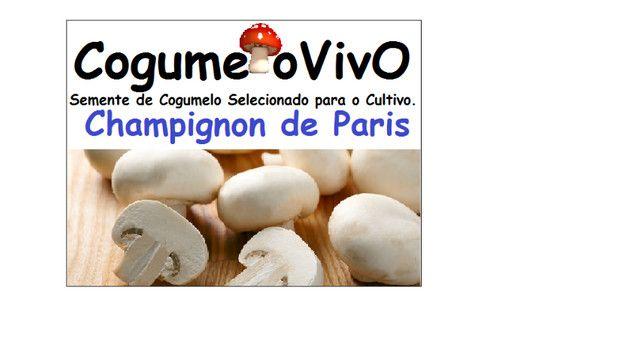 Vende semente de cogumelos o acima de 5 kg o kilo sai 20 reais - Foto 2