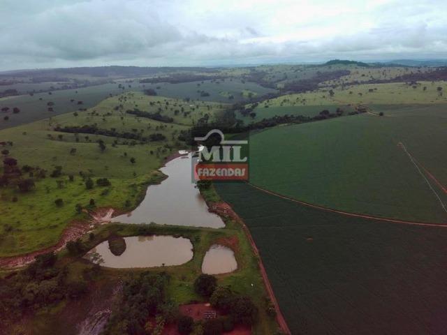 Área irrigada ( pivo central ) Fazenda 68 alqueires ( 333 hectares ) Morrinhos-GO - Foto 6