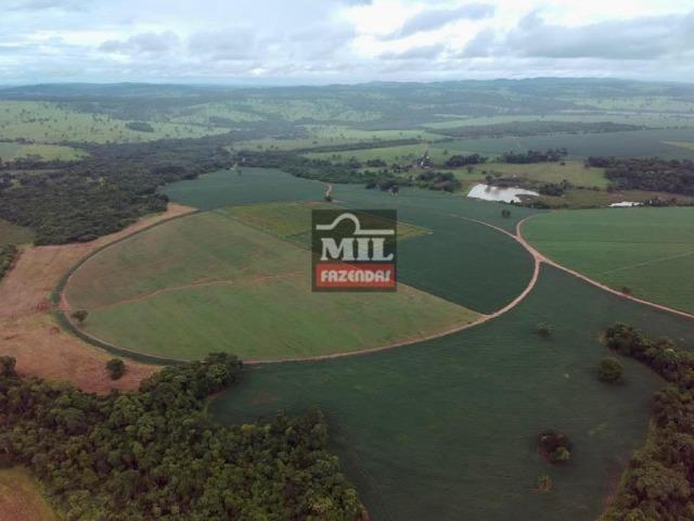 Área irrigada ( pivo central ) Fazenda 68 alqueires ( 333 hectares ) Morrinhos-GO - Foto 7
