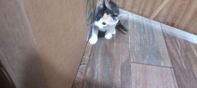 Doação para esses gatinhos  - Foto 6
