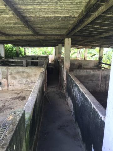 Granja, sítio, fazenda em Igarassu, 4 hectares com bastante benfeitorias! - Foto 15