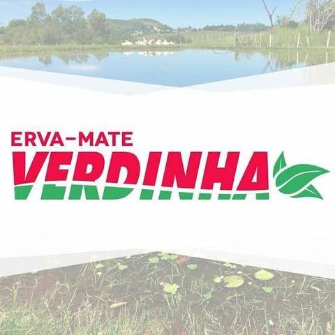 Erva-mate Verdinha