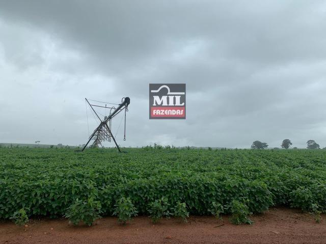 Área irrigada ( pivo central ) Fazenda 68 alqueires ( 333 hectares ) Morrinhos-GO - Foto 10