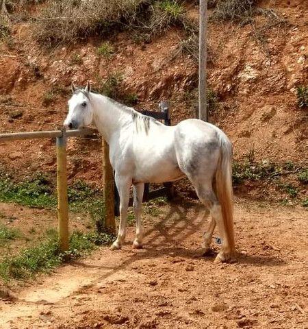 Potro 1/2 sangue árabe 1/2 sangue paint horse  - Foto 5