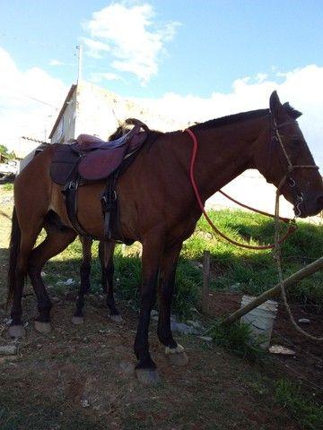 Cavalos - Foto 2