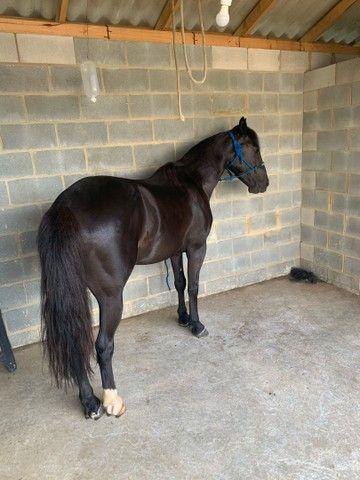Vende - se cavalo  - Foto 6