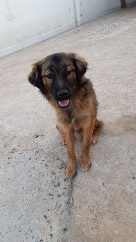 Doa-se cachorro macho (marrom e preto)
