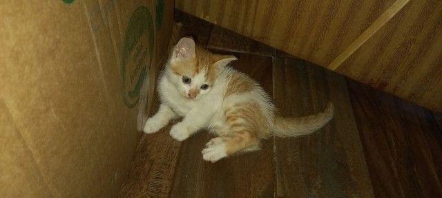 Doação para esses gatinhos  - Foto 5