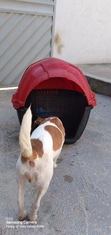 Casinha para cães/gatos R$ 70,00 aceito cartão  - Foto 3