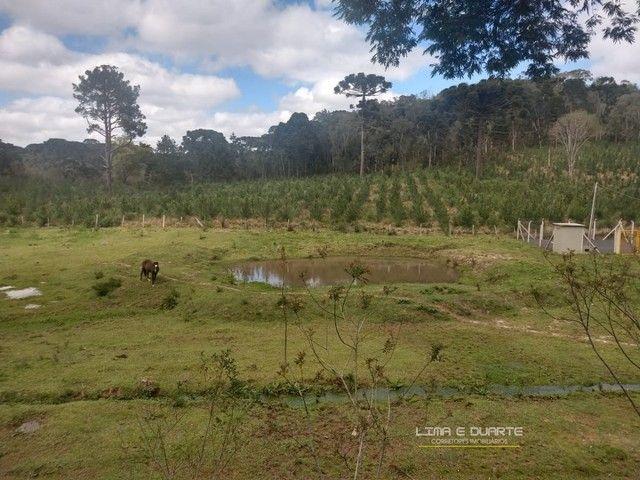 Chácara para Venda em Quitandinha Rio Negrinho-SC - Foto 16