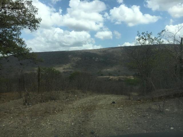 Fazenda em gravata 502 hectares, terreno amplo sen um vale com passagem de rio 8km da br23 - Foto 7