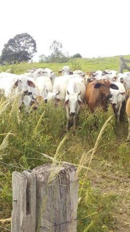 Fazenda - Centro Guaratinga - Foto 10