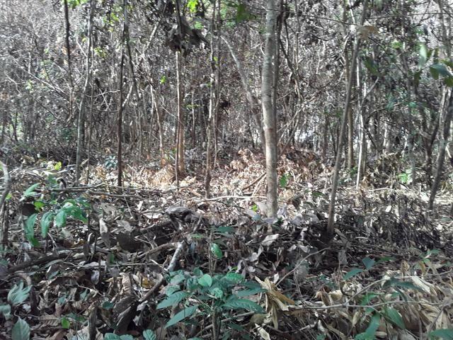 Vendo uma cachará verdi toda bosquêada - Foto 2