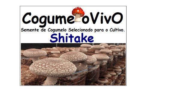 Vende semente de cogumelos o acima de 5 kg o kilo sai 20 reais - Foto 4