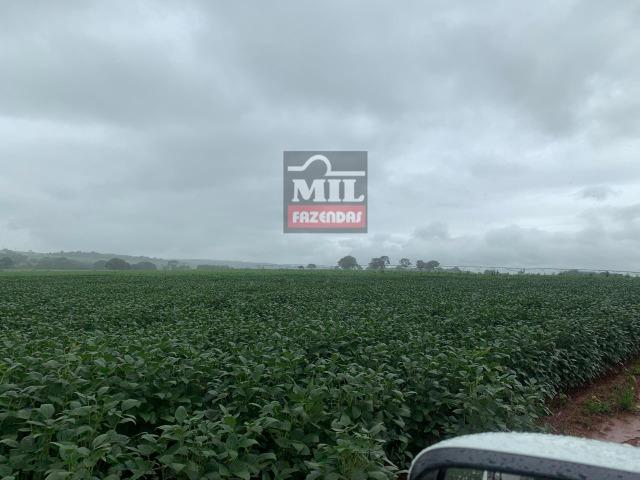 Área irrigada ( pivo central ) Fazenda 68 alqueires ( 333 hectares ) Morrinhos-GO - Foto 9