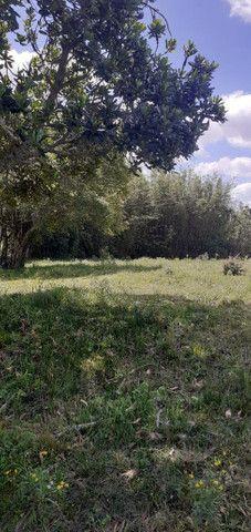 Chacara de 2 hectares á 7 km da br 293 - Foto 17