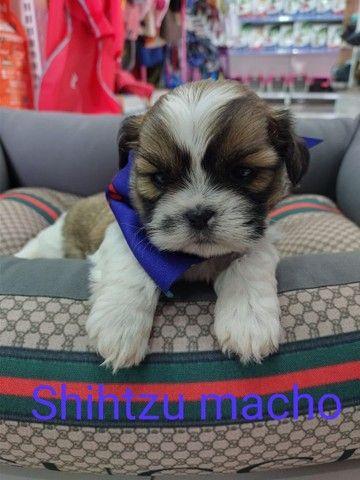 Paixão de Shihtzu levamos até você ou venha retirar na nossa clínica