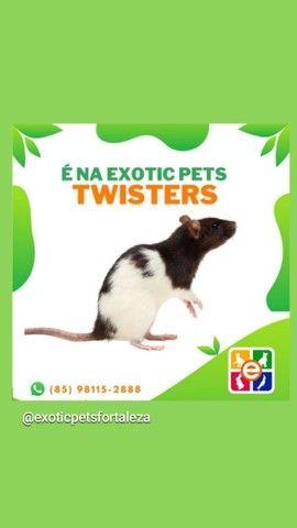 Twister Promoção