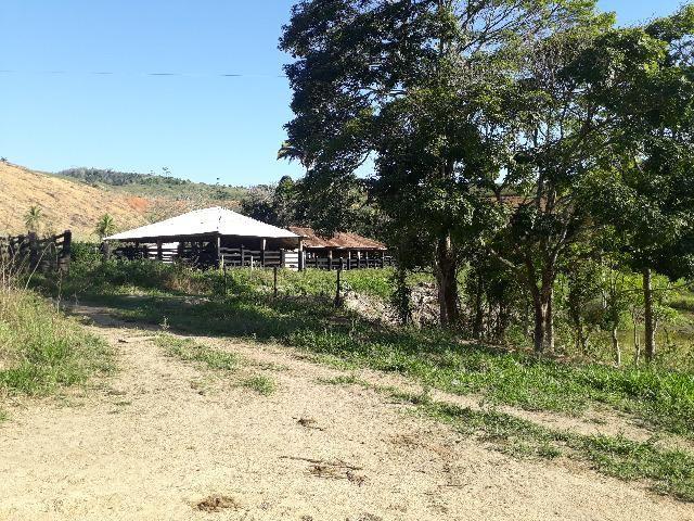 Fazenda com 174 hectares barra de são francisco - Foto 7