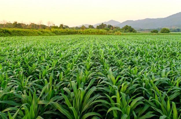 Fazenda com 5500 hectares em Mucajaí/RR. ler descrição do anuncio - Foto 2