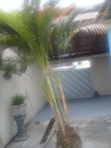 Vendo Palmeiras - Foto 2