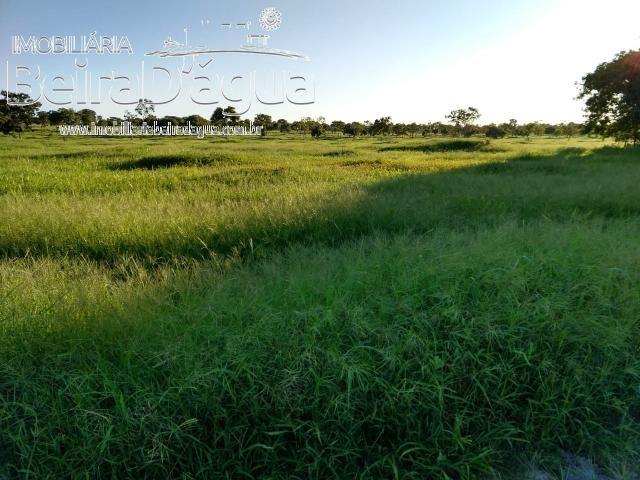 Fazenda Pecuaria 322 Hectares Plana - Foto 13