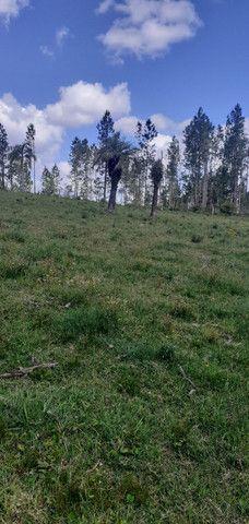 Chacara de 2 hectares á 7 km da br 293 - Foto 5