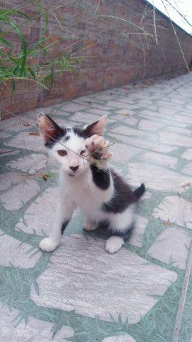 Gatos para doação - Foto 3