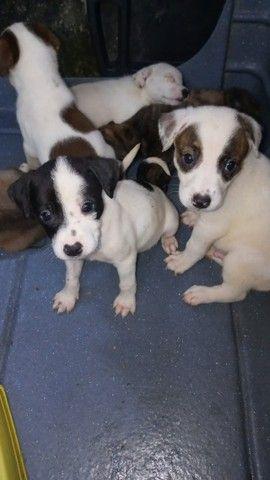 Filhotinhos de cachorro para adoção responsável