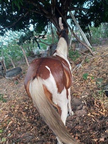 Cavalo e Égua - Foto 5