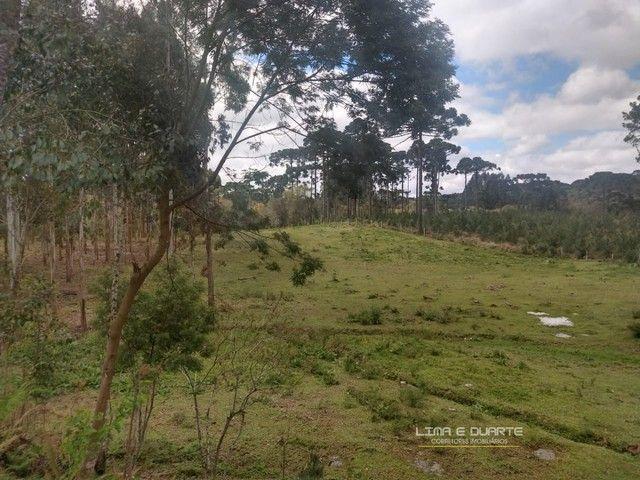 Chácara para Venda em Quitandinha Rio Negrinho-SC - Foto 17