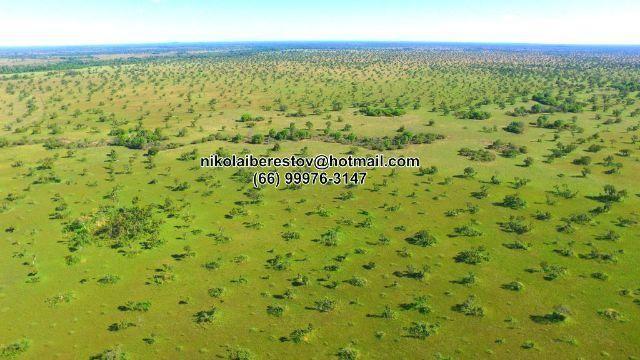 Fazenda 5.100 hectares nordeste mt nikolaiimoveis