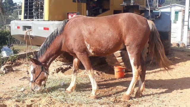 Cavalos crioulos - Foto 5
