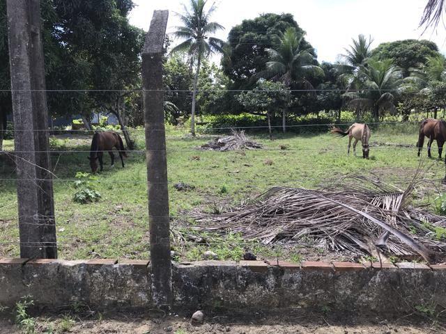 Granja, sítio, fazenda em Igarassu, 4 hectares com bastante benfeitorias! - Foto 20