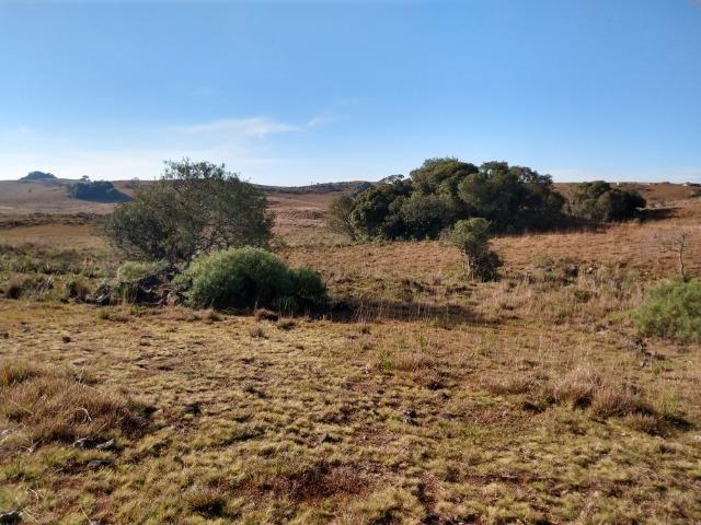 Área de terras com 22,24 hectares própria para cultura - Foto 4