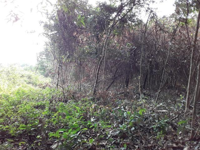 Vendo uma cachará verdi toda bosquêada - Foto 6
