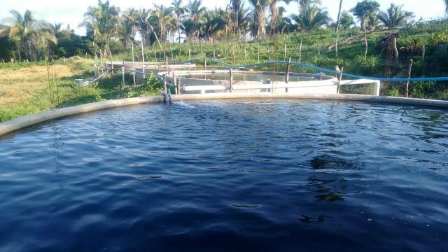Vendo piscicultura/balneário - Foto 11