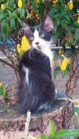 Gatos para doação - Foto 5