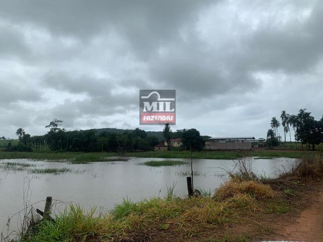 Área irrigada ( pivo central ) Fazenda 68 alqueires ( 333 hectares ) Morrinhos-GO - Foto 12