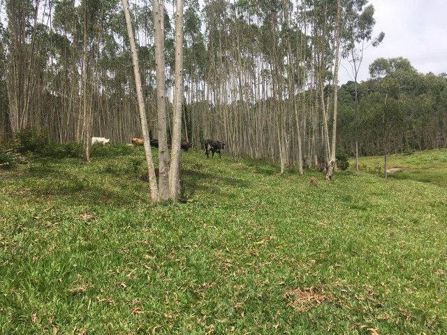 S47- Vendo terreno na região de Igaratá - Foto 4