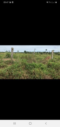 Fazenda 1100 alqueires soja ou pecuária. - Foto 3